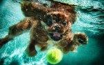 chiens sous l'eau 14